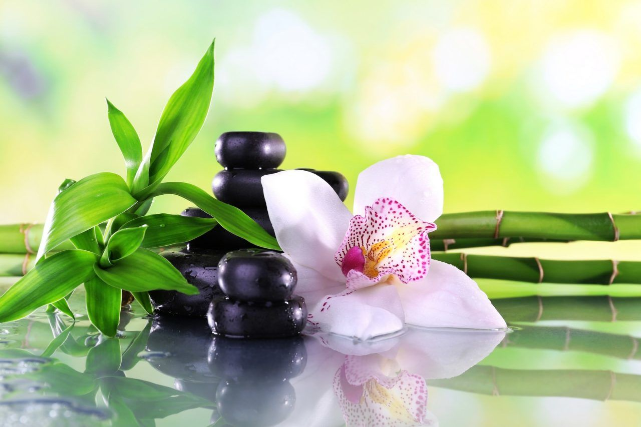 Spa stones, bamboo branches and white orchid